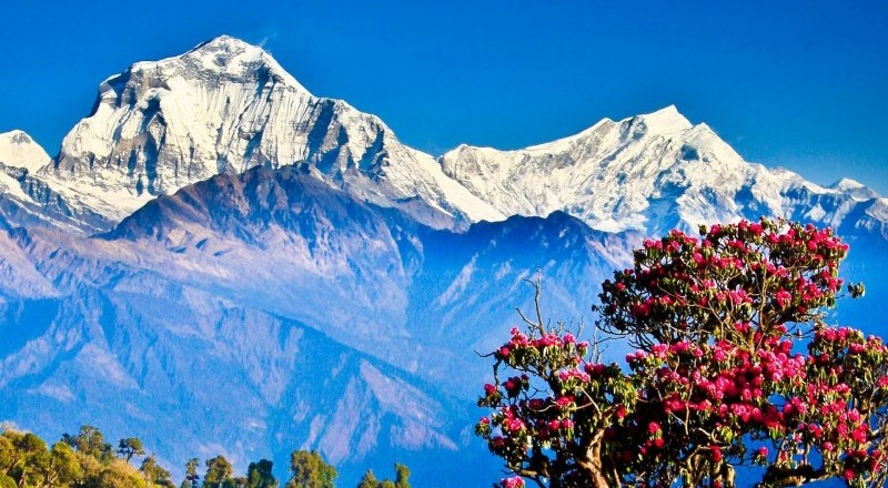 The Best Short Trek in Nepal: Ghorepani Poon Hill Trek